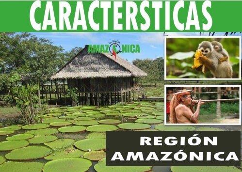 Caracteristicas mas importantes de la region Amazonica