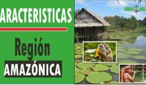 Cuales son las caracteristicas de la region amazonica de Colombia