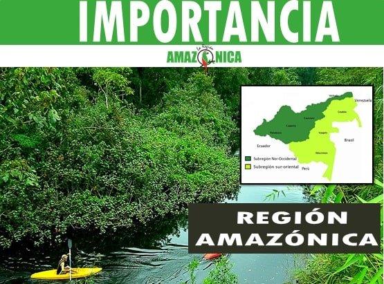 Importancia de la region amazonica colombiana