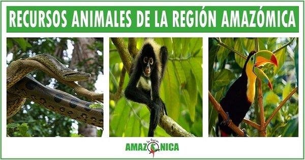 recursos naturales de la region amazonica