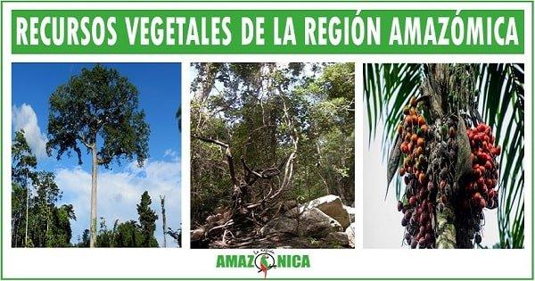 riquezas naturales de la region amazonica