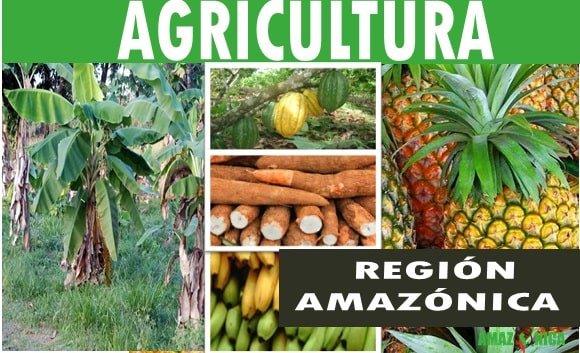 agricultura region amazonica colombia