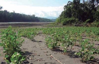 suelos de la region amazonica