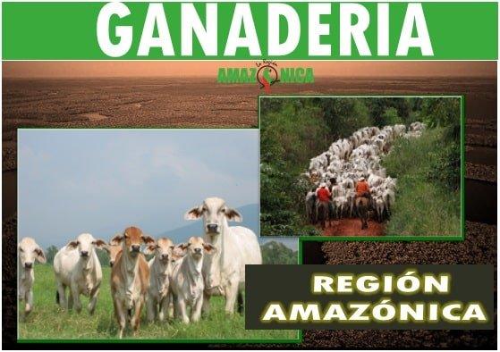 Ganadería en la amazonia colombiana