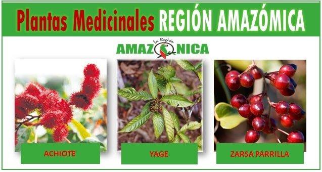 Cuantas plantas medicinales hay en el Amazonas