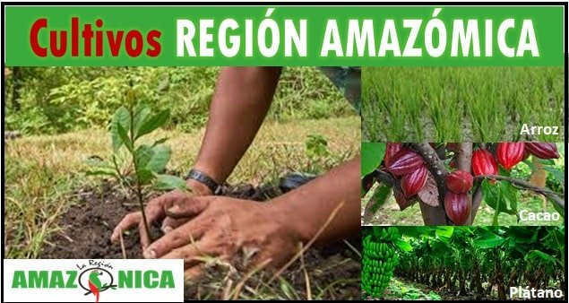 Cultivos de la region amazonica colombiana