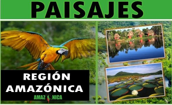 Paisajes de la region Amazonica colombiana